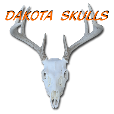 Dakota Skulls Taxidermy